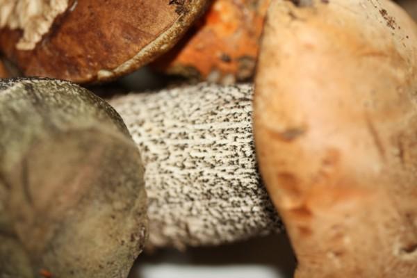 Gotując grzyby trzeba pamiętać, by wcześniej je odpowiednio długo wymoczyć w wodzie.
